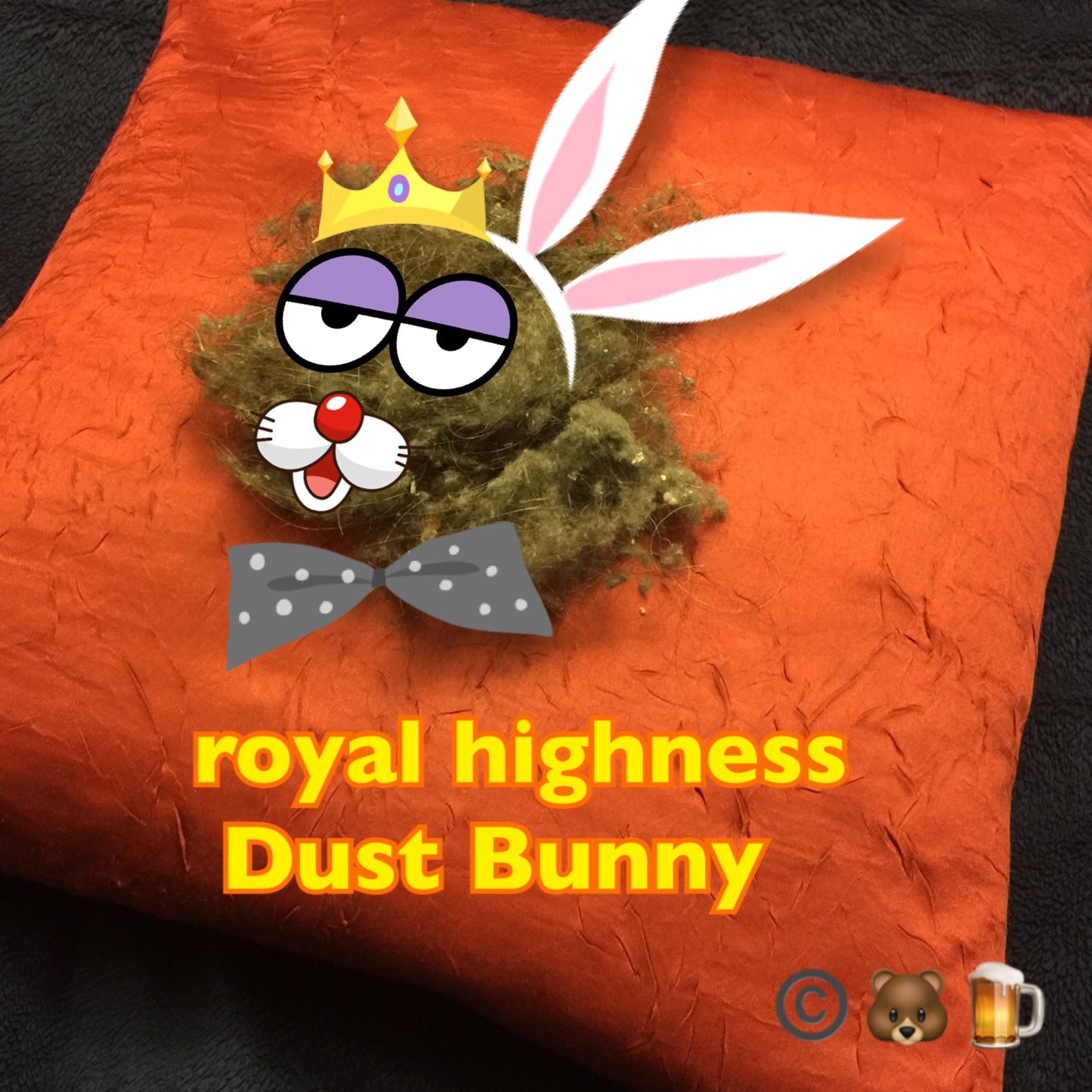 royal highness dust bunny